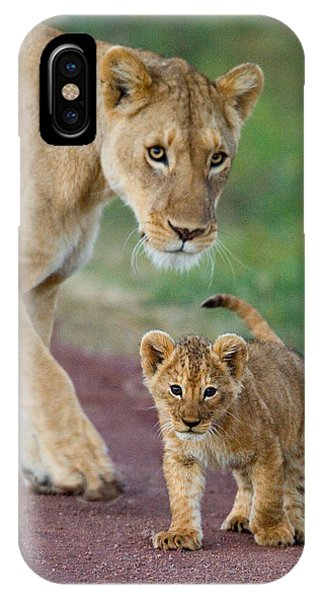 Close-up Of A Lioness And Her Cub IPhone Case
