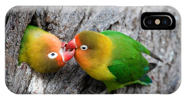 East Africa iPhone Case - Close-up Of A Pair Of Lovebirds, Ndutu by Panoramic Images