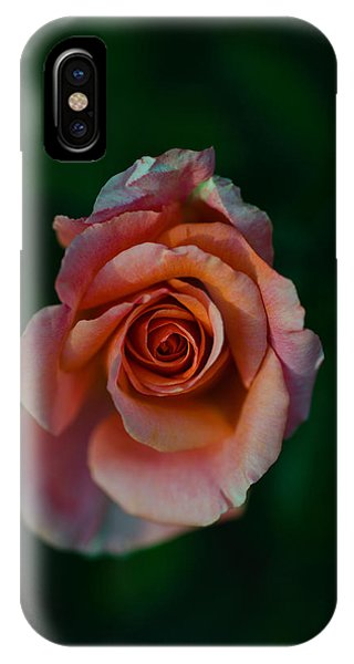 Beverly Hills iPhone Case - Close-up Of A Pink Rose, Beverly Hills by Panoramic Images