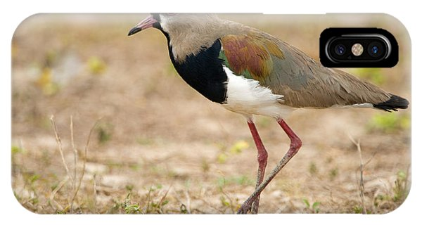 Close-up Of A Southern Lapwing Vanellus IPhone Case