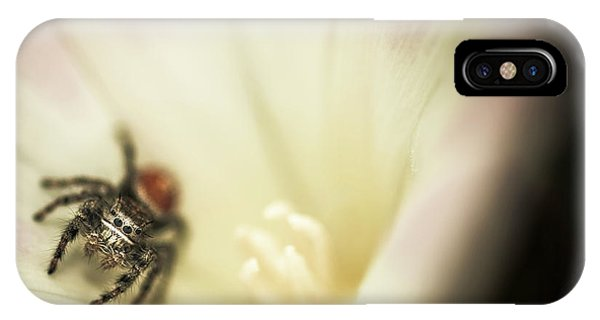 Barbara Steele iPhone Case - Close-up Of A Spider Inside A Flower by Kevin Steele