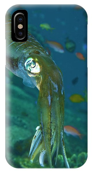 Close-up Of A Squid, Lembata Island Phone Case by Jaynes Gallery