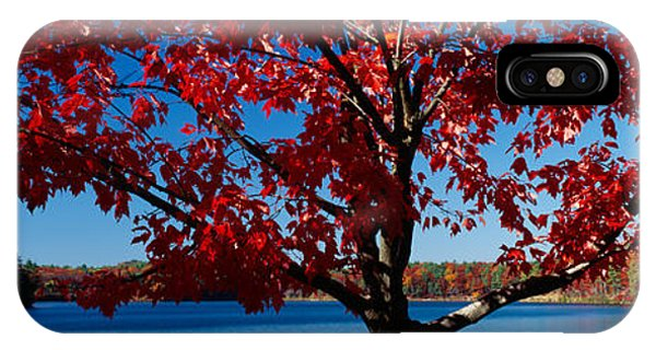 Close-up Of A Tree, Walden Pond IPhone Case