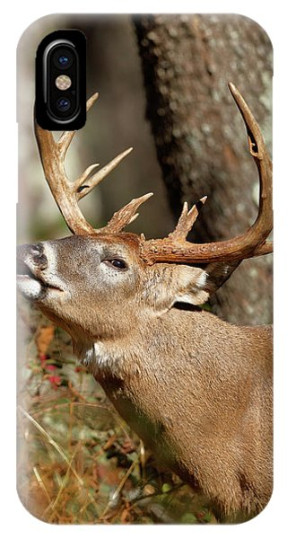 White Tailed Deer iPhone Case - Close-up Of A White-tailed Deer Curling by Paul E Tessier