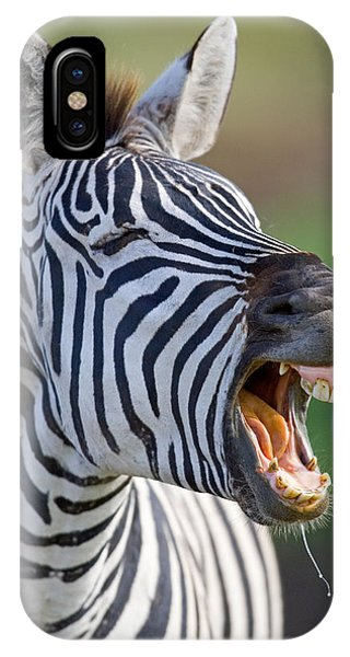 Close-up Of A Zebra Calling, Ngorongoro IPhone Case