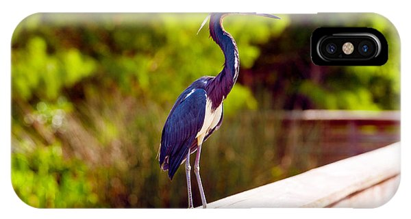 Boynton iPhone Case - Close-up Of An Blue Egret, Boynton by Panoramic Images