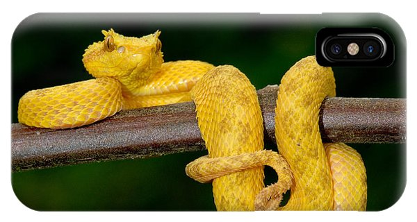 Serpent iPhone Case - Close-up Of An Eyelash Viper by Panoramic Images