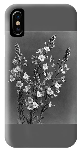 Close Up Of Gentian Speedwell Flowers IPhone Case