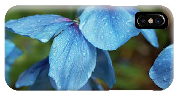 iPhone Case - Close-up Of Himalayan Poppy Flowers by Panoramic Images
