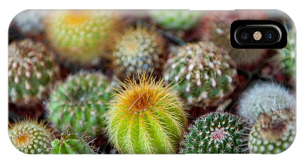 Succulent iPhone Case - Close-up Of Multi-colored Cacti by Panoramic Images