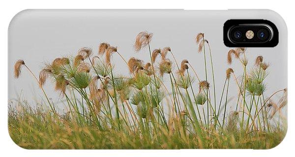 Close-up Of Papyrus Plants, Okavango IPhone Case