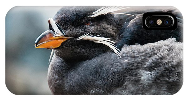 Auklets iPhone Case - Close-up Of Rhinoceros Auklet by Turner Forte