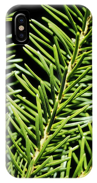Spruce iPhone Case - Close-up Of The Leaves Of The Spruce Tree by Alfred Pasieka/science Photo Library