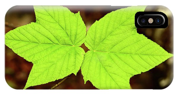 iPhone Case - Close Up Of The Paired Leaves by Darlyne A. Murawski