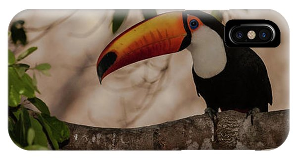 Close-up Of Tocu Toucan Ramphastos Toco IPhone Case