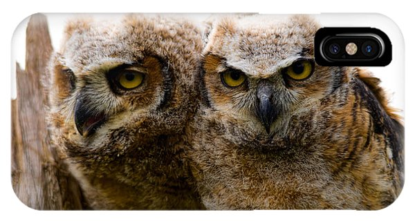 Close-up Of Two Great Horned Owlets IPhone Case