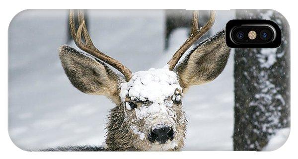 Close Up Of Winter Buck IPhone Case
