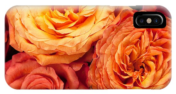 Close Up View Of Pink Orange Yellow Hybrid Tea Roses IPhone Case
