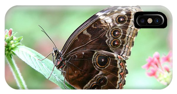 Closed Blue Morpho IPhone Case
