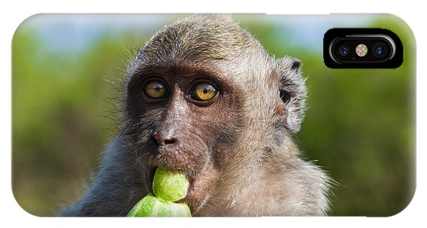 Closeup Monkey Eating Cucumber IPhone Case