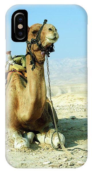 Psi iPhone Case - Closeup Of A Camel by Photostock-israel