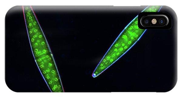 Aquatic Plants iPhone Case - Closterium Desmids by Marek Mis