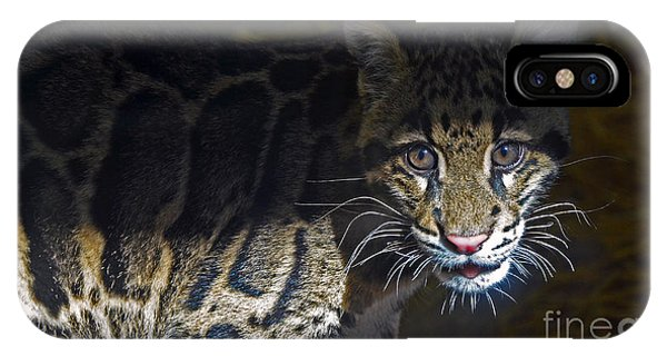 Clouded Snow Leopard Cub IPhone Case