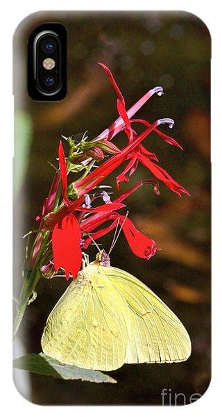 Cloudless Sulphur On Cardinal Flower IPhone Case