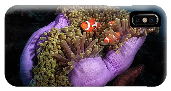 Clown Fish With Magnificent Anemone IPhone Case