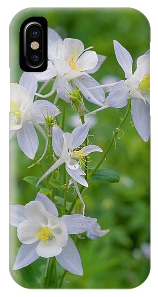 Alpine Meadows iPhone Case - Cluster Of Columbine In Alpine Meadow by Howie Garber
