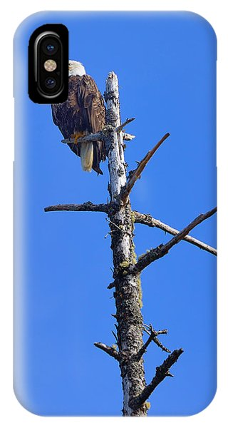Coastal Bald Eagle IPhone Case