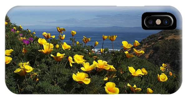 Coastal California Poppies IPhone Case