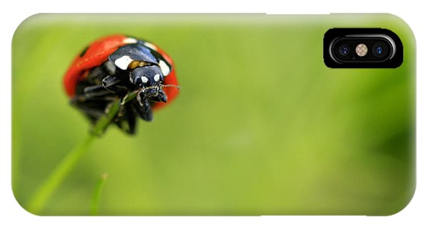 Coccinellidae  IPhone Case