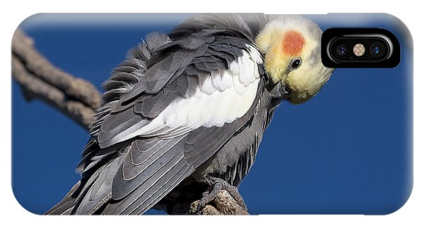 Cockatiel - Canberra - Australia IPhone Case