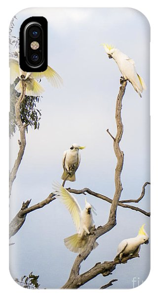 Cockatoos - Canberra - Australia IPhone Case