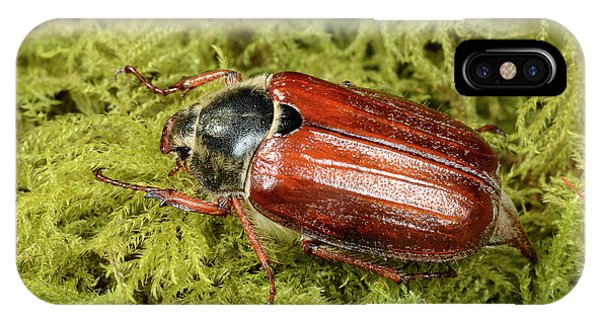 Coleoptera iPhone Case - Cockchafer by Nigel Downer