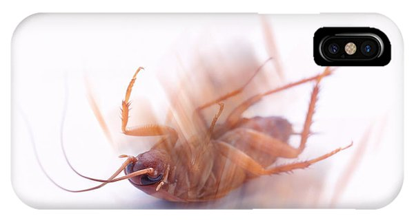 Cockroach Phone Case by Gustoimages/science Photo Library