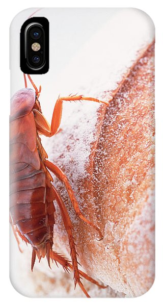 Cockroach On Bread Phone Case by Gustoimages/science Photo Library