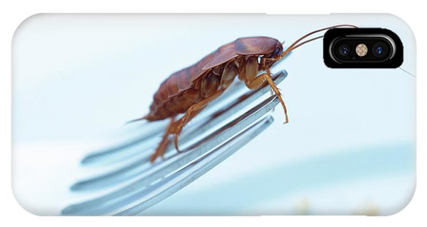 Cockroach On Fork Phone Case by Gustoimages/science Photo Library