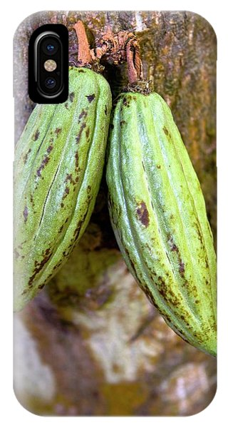 Bean Town iPhone Case - Cocoa Pods by Tony Camacho/science Photo Library