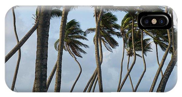 Coconut Palm (cocos Nucifera Phone Case by Pete Oxford