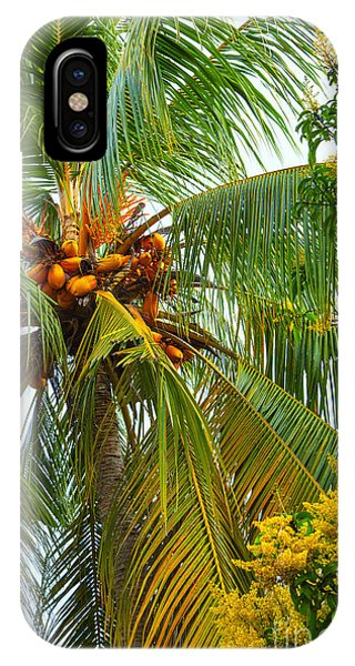 Tropes iPhone Case - Coconut Palm In Tropical Garden by Gina Koch