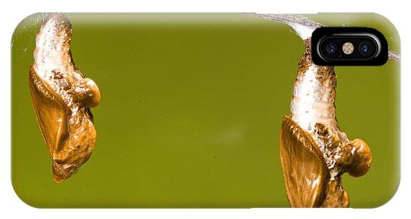 Agraulis Vanillae iPhone Case - Cocooned Gulf Fritillary Butterflies by Millard H. Sharp