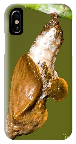 Agraulis Vanillae iPhone Case - Cocooned Gulf Fritillary Butterfly by Millard H. Sharp