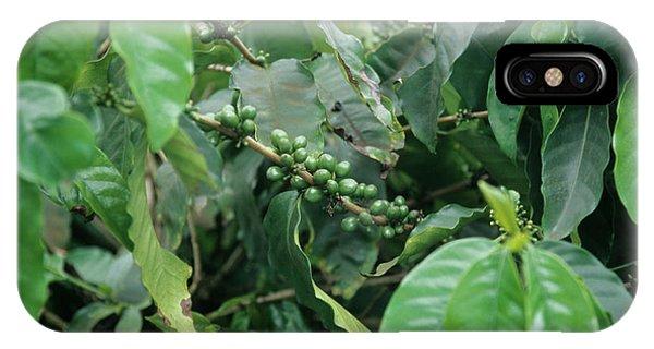 Coffee Plant Phone Case by Cristina Pedrazzini/science Photo Library