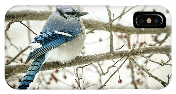 Cold Blue Jay IPhone Case