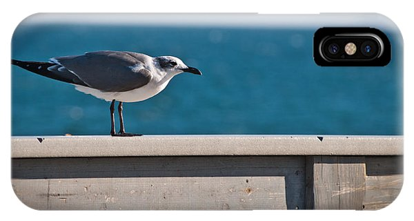 Cold Gull IPhone Case