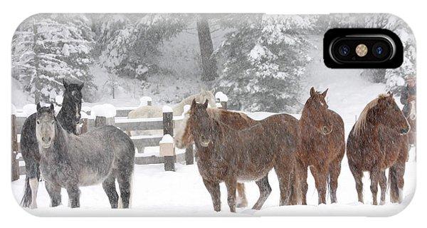 Cold Ponnies IPhone Case