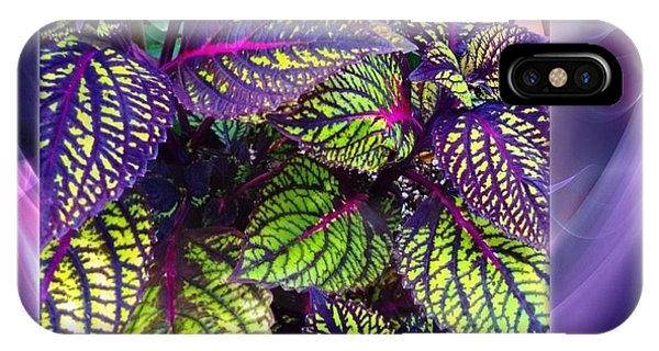 Coleus Abstract IPhone Case