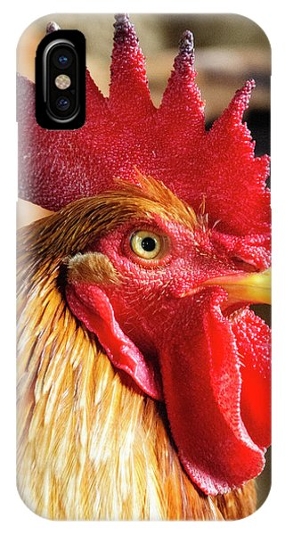 Colombia iPhone Case - Colombia, Minca Domestic Rooster by Matt Freedman